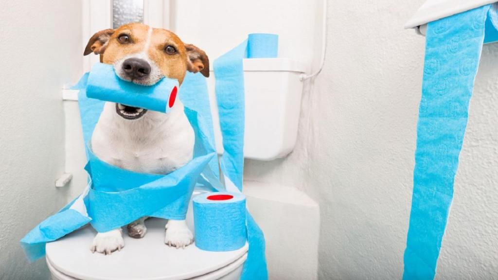 آموزش دستشویی کردن به سگ ها؛ چگونه توله سگ خود را برای توالت رفتن تعلیم دهید