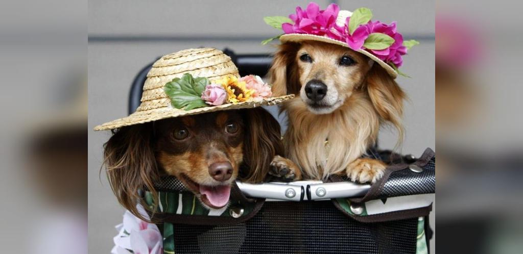 اسامی خنده دار سگ؛ الهام گرفته از بازیگران، فیلم ها و کتاب ها