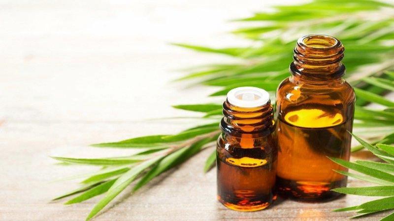 خواص روغن درخت چای + موارد کاربرد، نحوه استفاده و عوارض جانبی آن