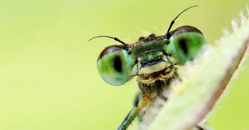 فواید حشرات در زیبایی شناسی