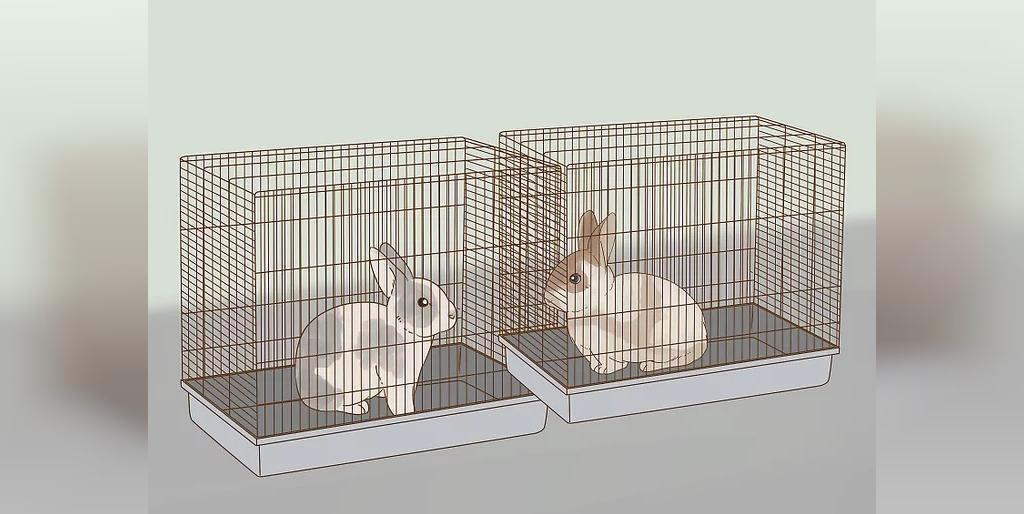 اقدامات لازم برای زایمان خرگوش