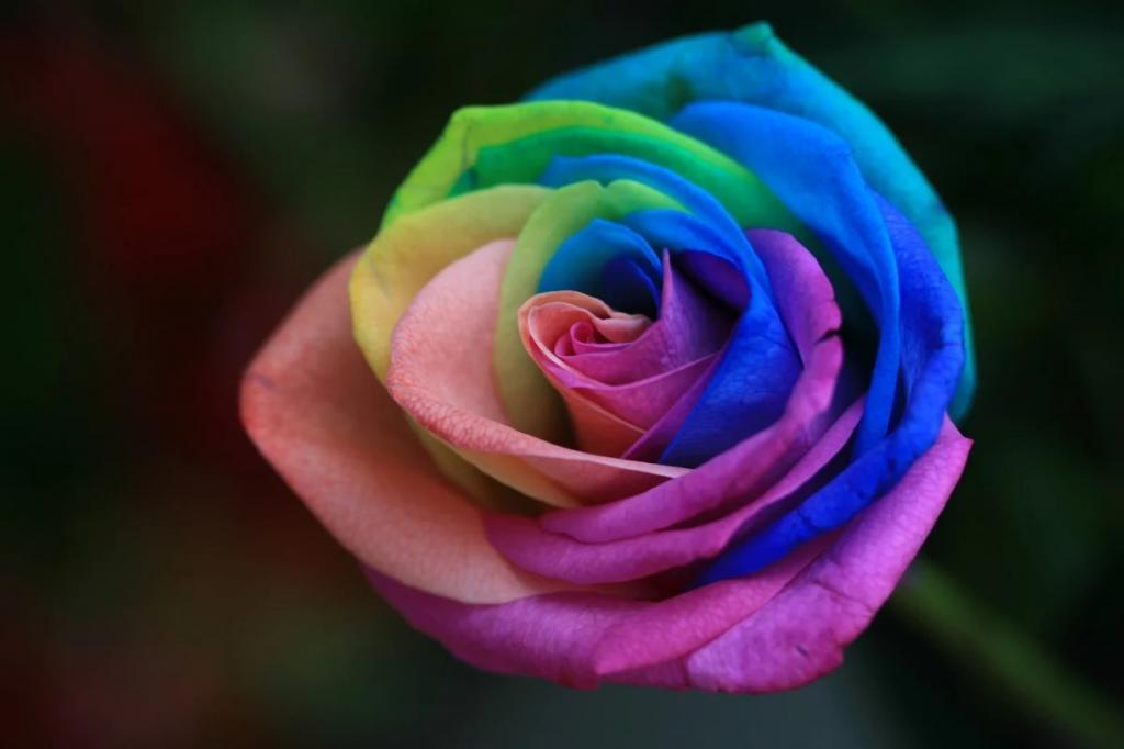 کاربردهای مختلف انواع گل رز کدام است