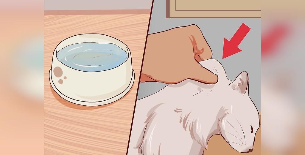 روش تشخیص کمبود آب بدن ناشی از اسهال گربه