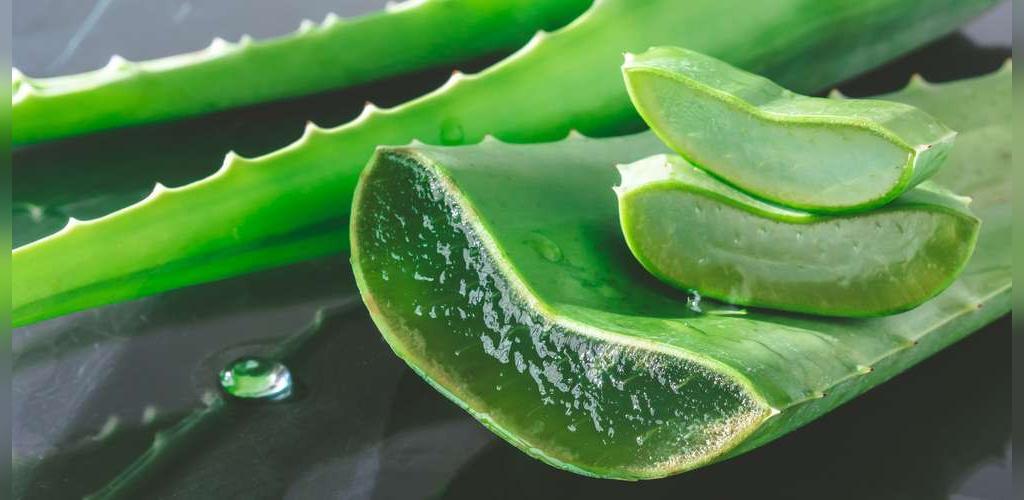 درمان اگزما با روش های طبیعی و گیاهی