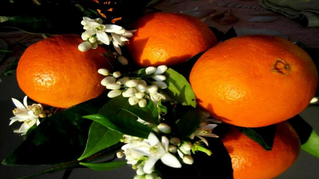 فواید و خواص بهار نارنج برای سلامتی، پوست و مو و عوارض آن