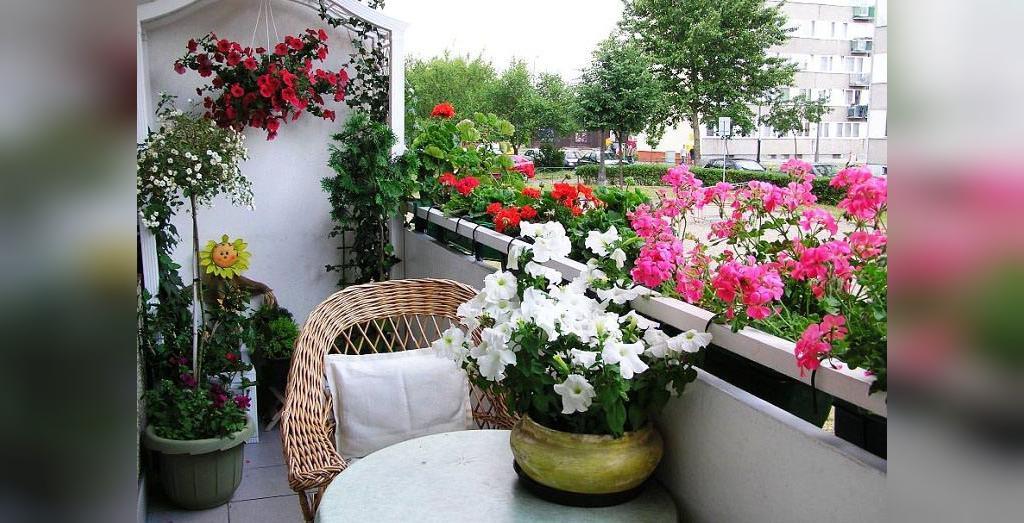 شادابی گل های آپارتمانی با روغن کرچک