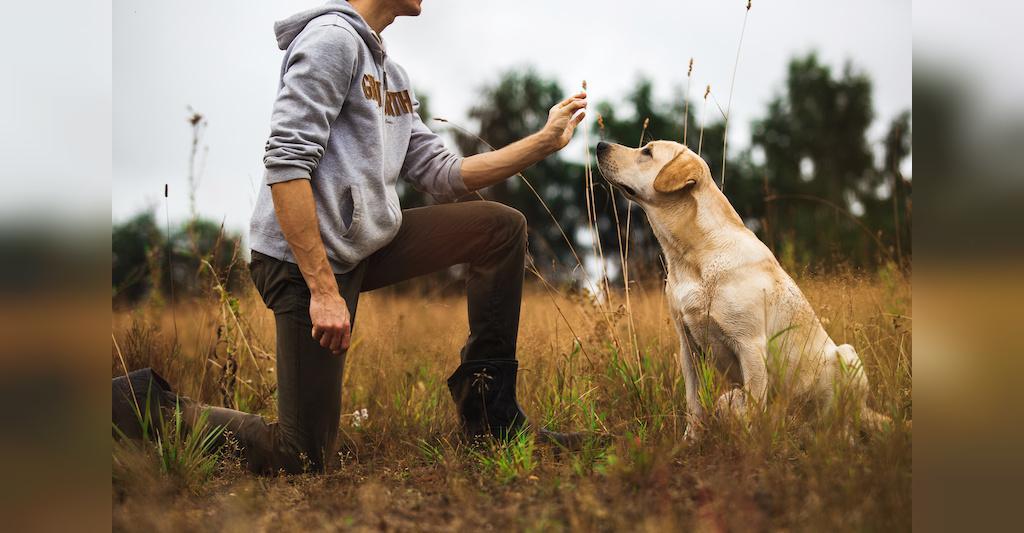 دلایل تربیت سگ