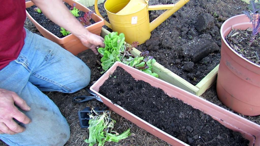 شرایط لازم برای کاشت تربچه در گلدان منزل