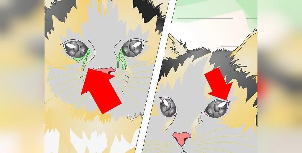 علائم عفونت چشم گربه