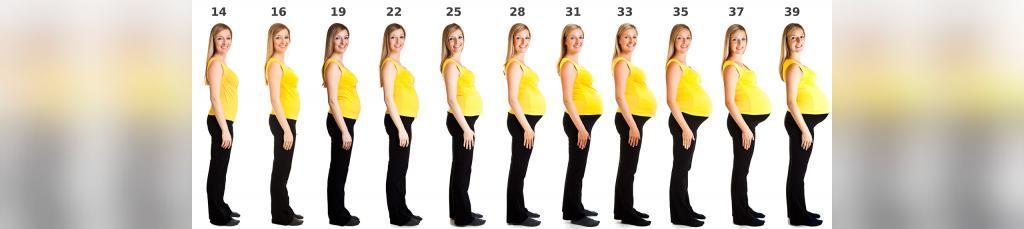 تغییرات بدن در 3 ماهه اول