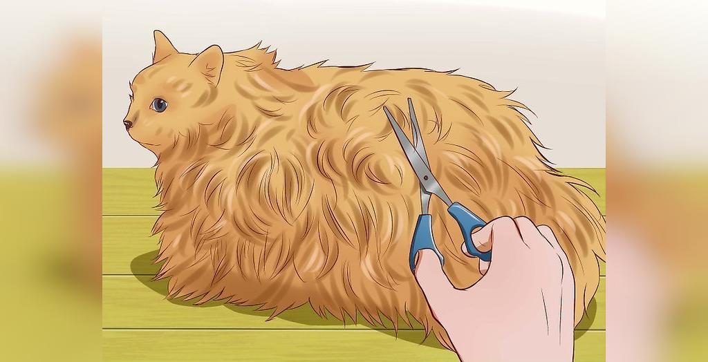 روش های که مانع از بروز یبوست در گربه می شود