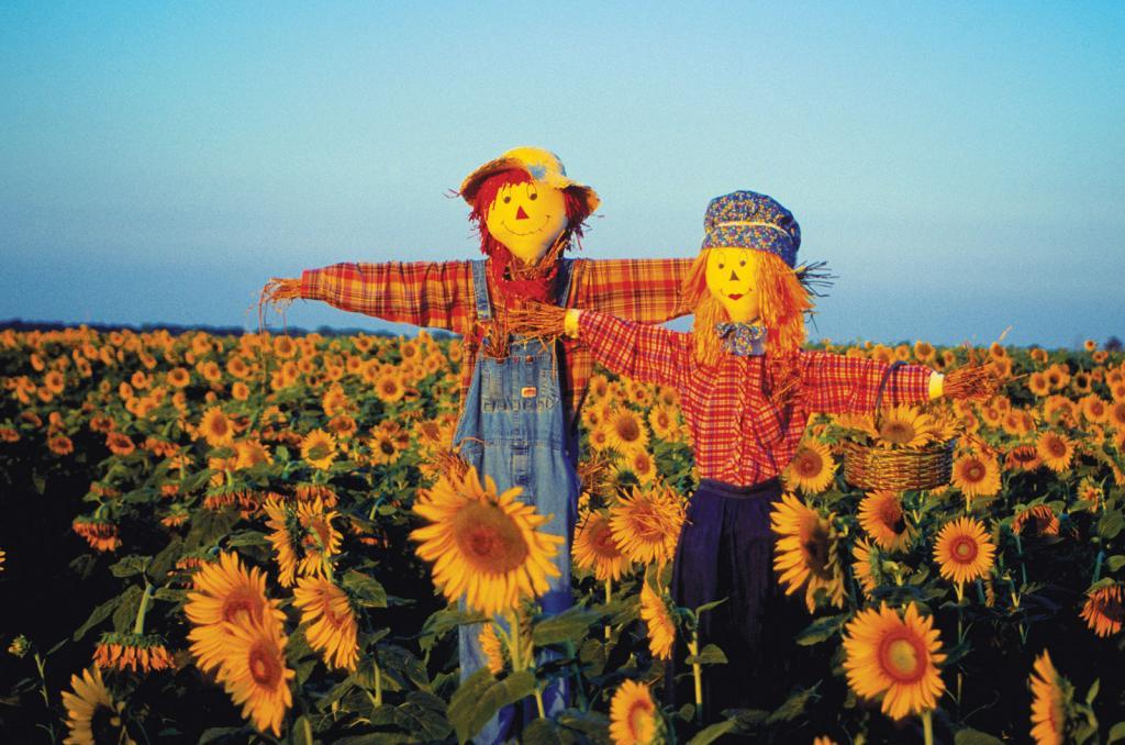 بهترین راه پیشگیری از آلوده شدن گل های آفتابگردان