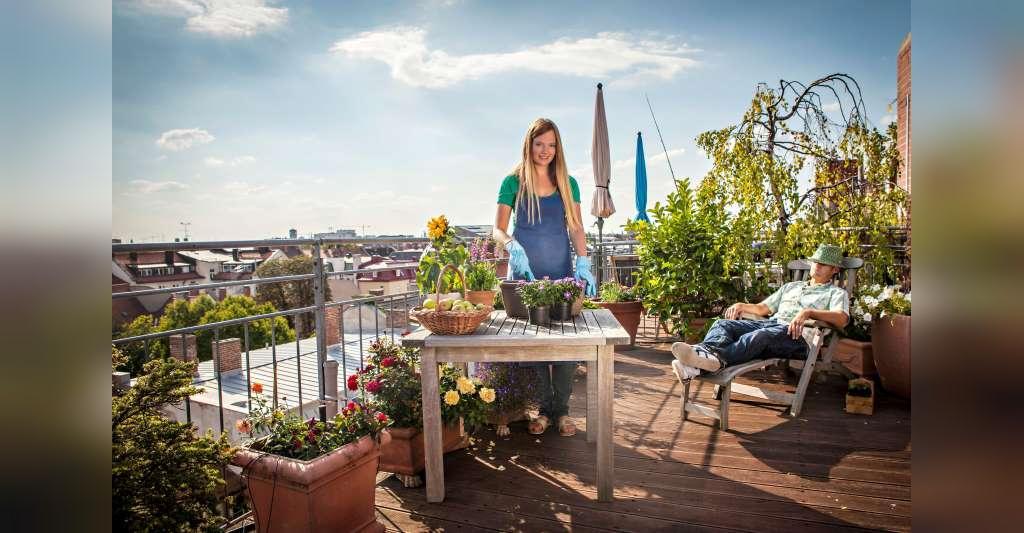 چگونه در پشت بام باغچه بسازیم؟