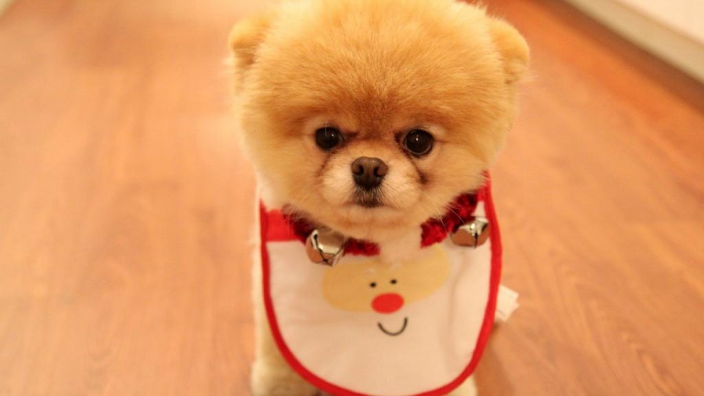 اسم های بانمک برای سگ های کوچک