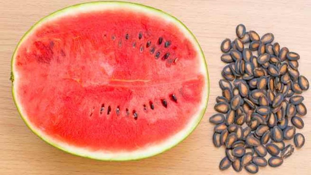 فواید و مزایای تخمه و روغن هندوانه برای سلامتی، درمان ناباروری و پوست