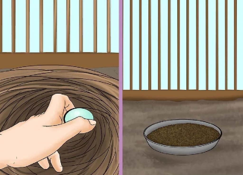 بهترین روش نگهداری از فنچ در منزل