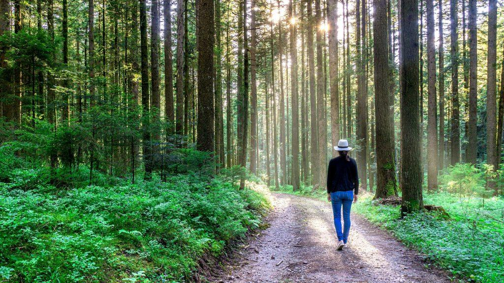 دوش گرفتن در جنگل، از روش تقویت سلامت عاطفی