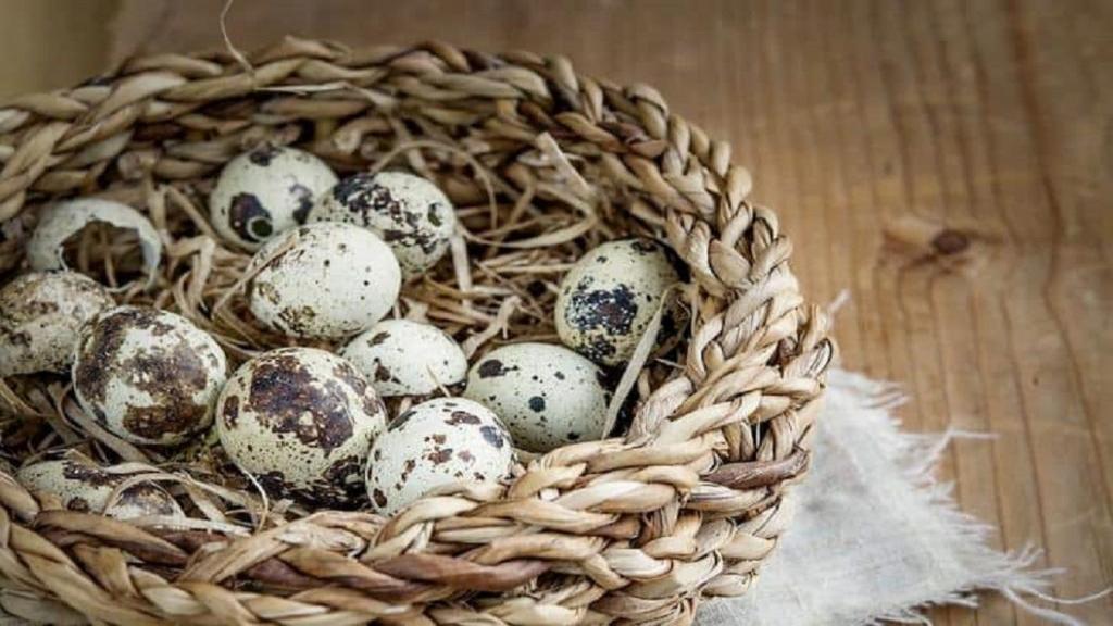 خواص تخم بلدرچین برای کودکان، بزرگسالان و زیبایی پوست
