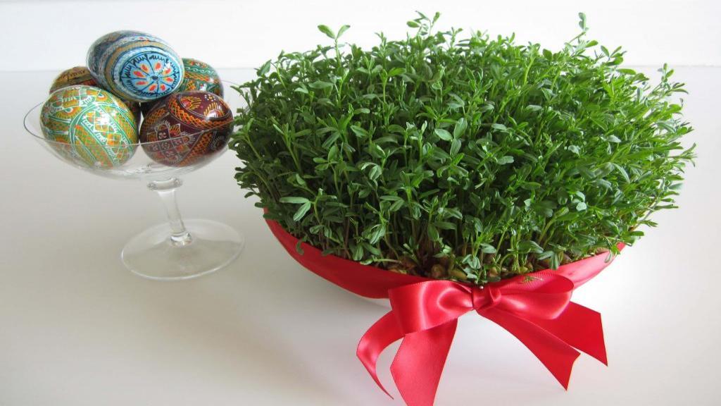 طرز تهیه سبزه کنجد ؛ روش کاشت سبزه عید با کنجد سیاه