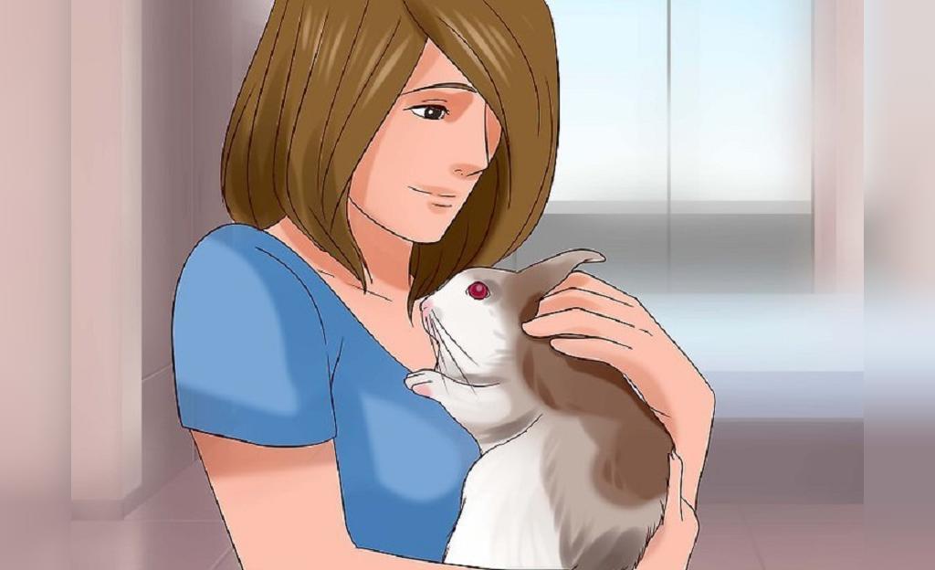 روش انتخاب اسباب بازی برای خرگوش