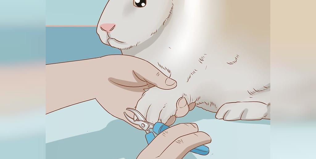 اصول مراقبتی خرگوش