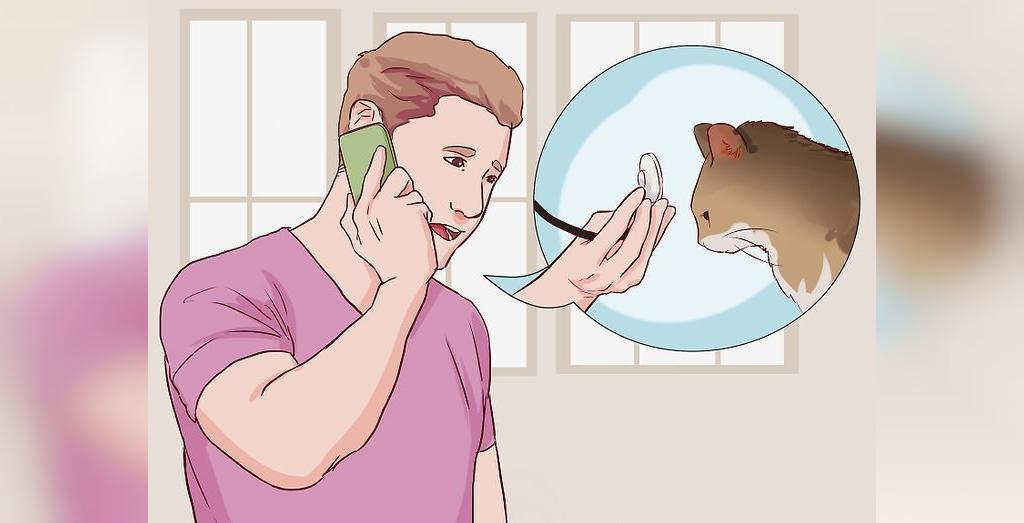 روش درمان اسهال گربه