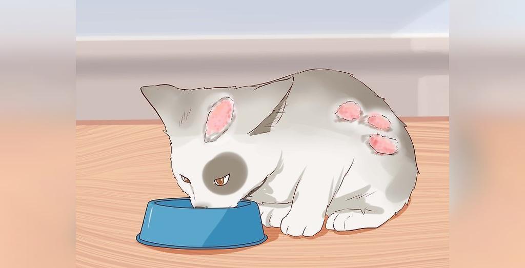 درمان خانگی اسهال گربه