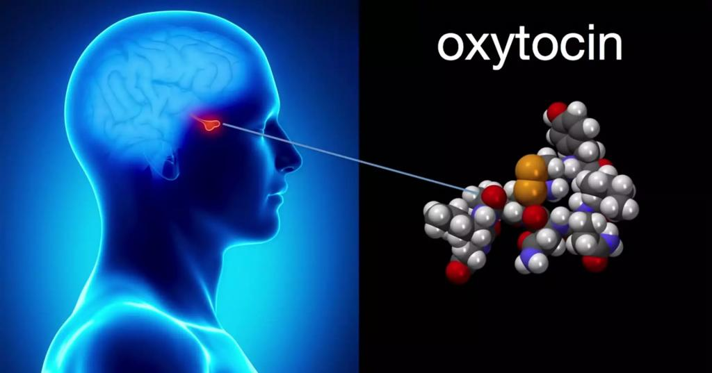 اثرات رابطه جنسی در مغز