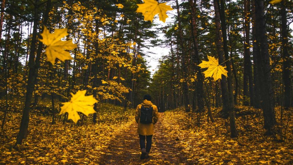 ژست عکاسی پسرانه و مردانه گنگ و هنری در طبیعت و جنگل پاییزی