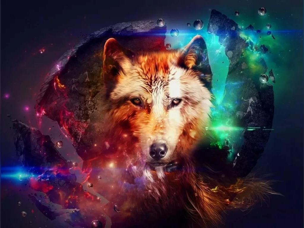 عکس فوق العاده زیبا گرگ برای پروفایل
