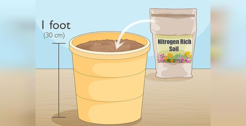 برای پرورش بیبی اسفناج، یک گلدان را حداقل به میزان 30 سانتی متر با خاک سرشار از نیتروژن پر کنید