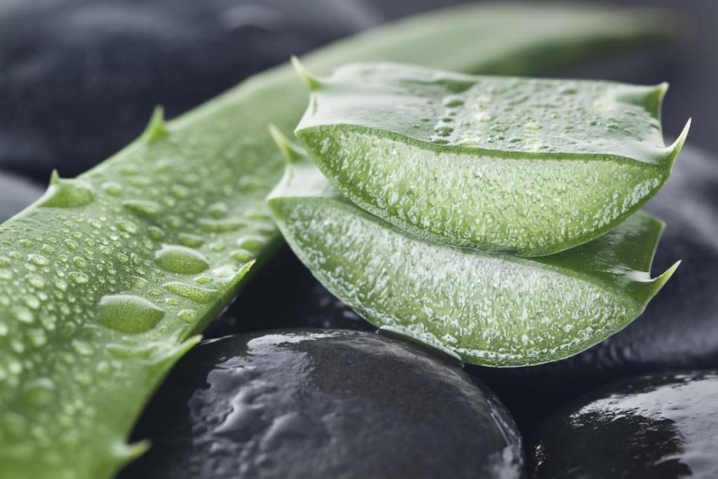 بهترین مواد گیاهی برای اگزما در کودکان و نوزادان