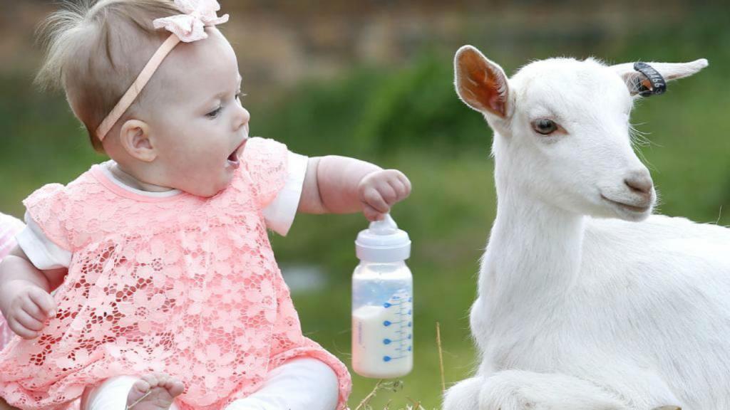 بهترین جایگزین شیر مادر