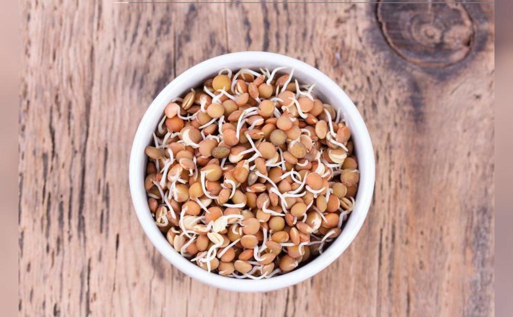 روش کاشت سبزه عدس برای عید