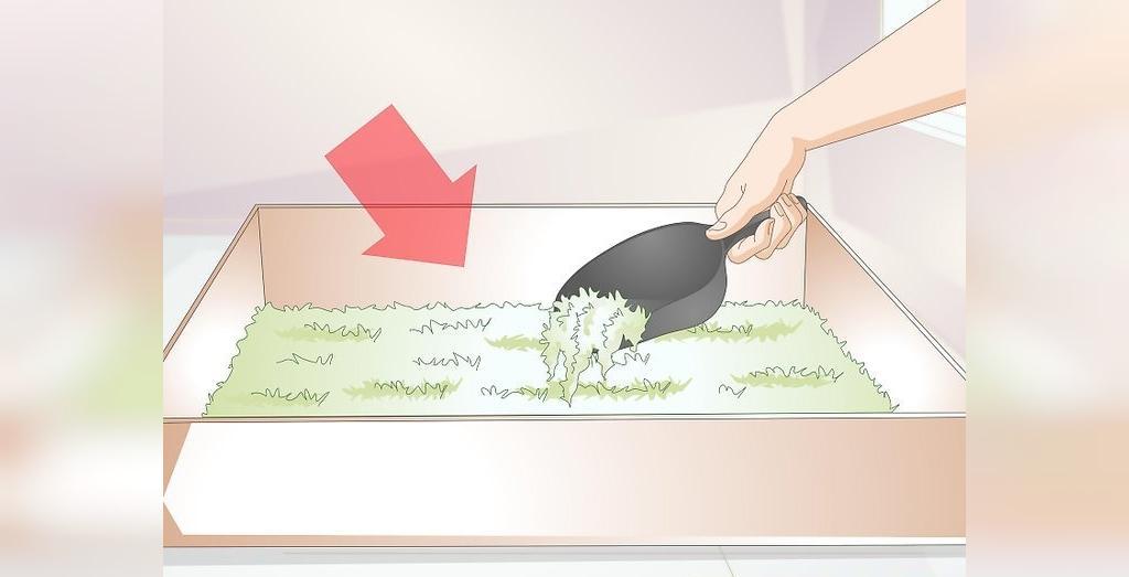ابزارهای لازم برای نگهداری از جوجه