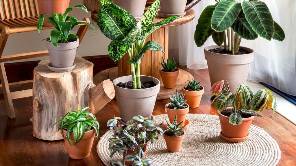 تصفیه هوای گیاهان خانگی