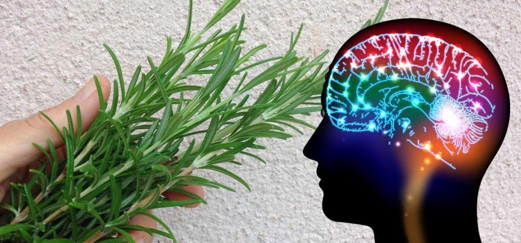 خواص چای رزماری برای تقویت حافظه و پپیشگیری از آلزایمر