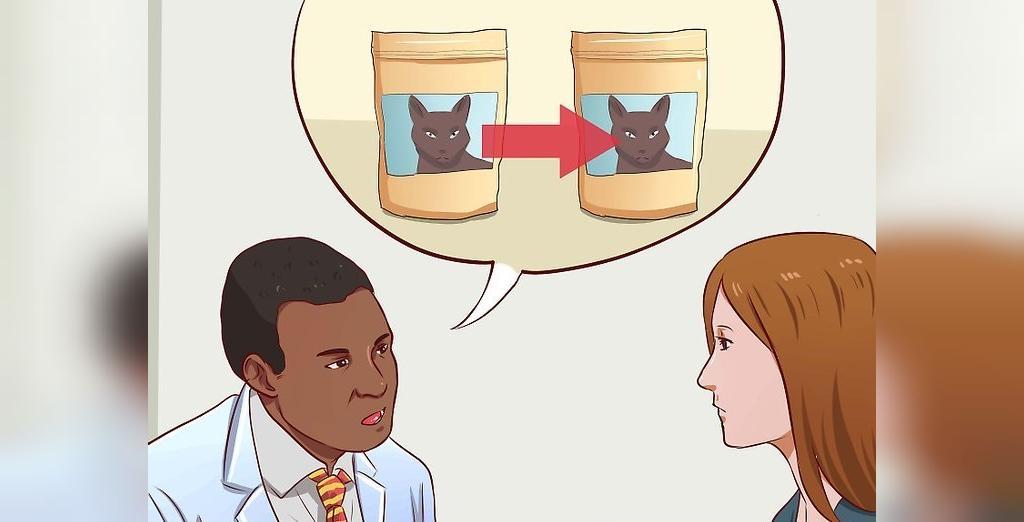 چه زمانی برای یبوست گربه باید به دامپزشک مراجعه کرد