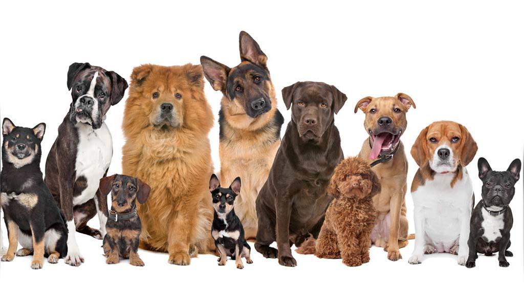 نژادهای برتر سگ