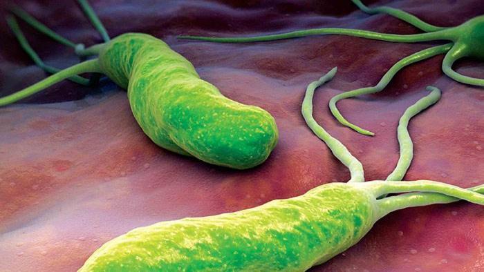 عفونت هلیکوباکتر پیلوری؛ معرفی 11 داروی طبیعی برای درمان عفونت Helicobacter pylori