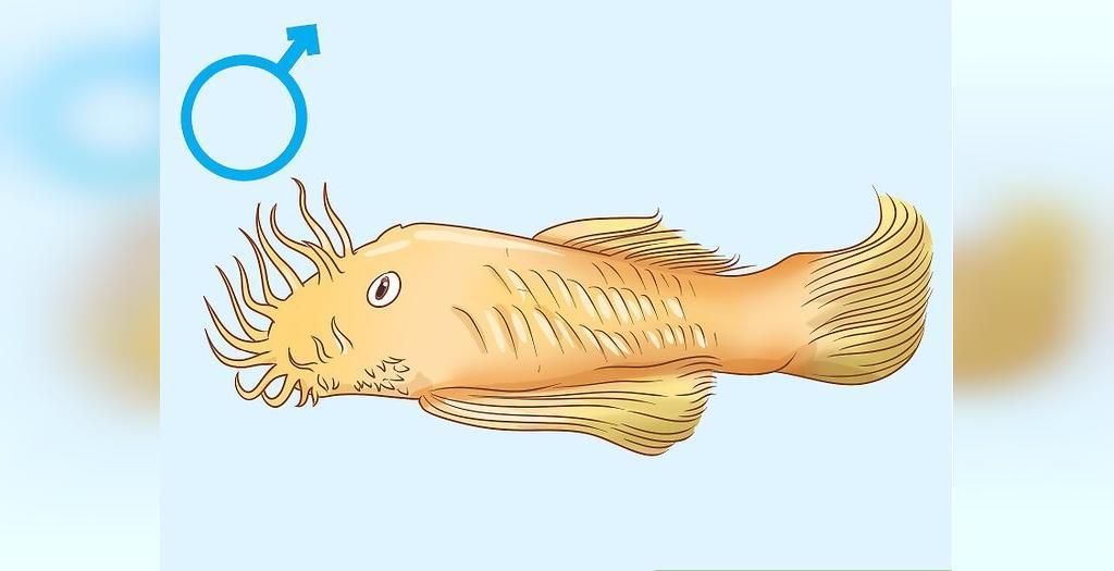 چطور می توانیم جنسیت ماهی را تعیین کنیم
