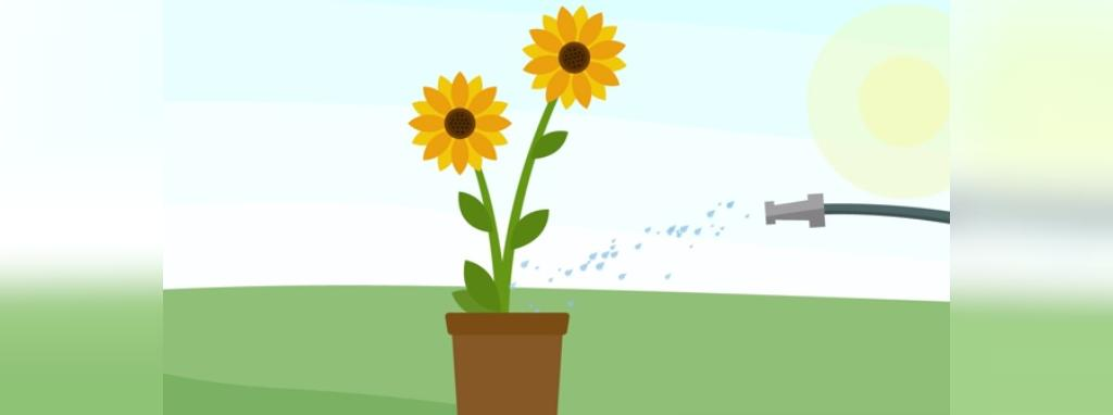 روش نگهداری از گل آفتاب گردان