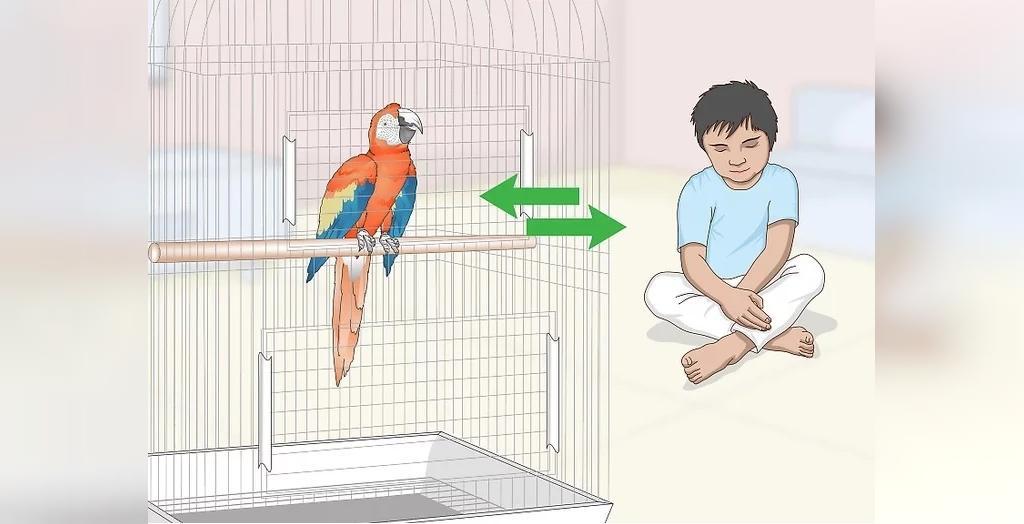 با طوطی همانند کودک صحبت کنید