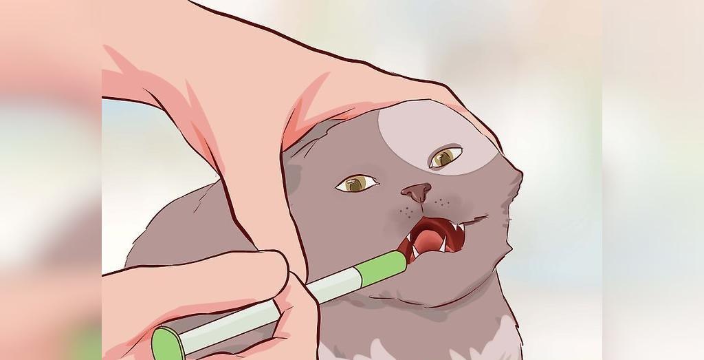 درمان اسهال گربه با دارو