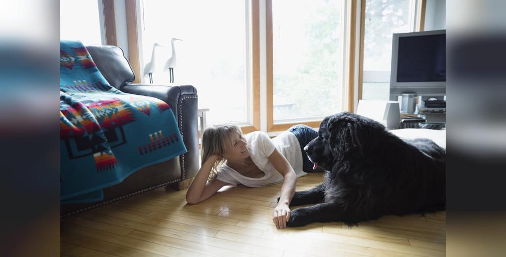 نژاد بزرگ سگ مناسب در ارابه رانی، ردیابی و توانایی در گذر از آب