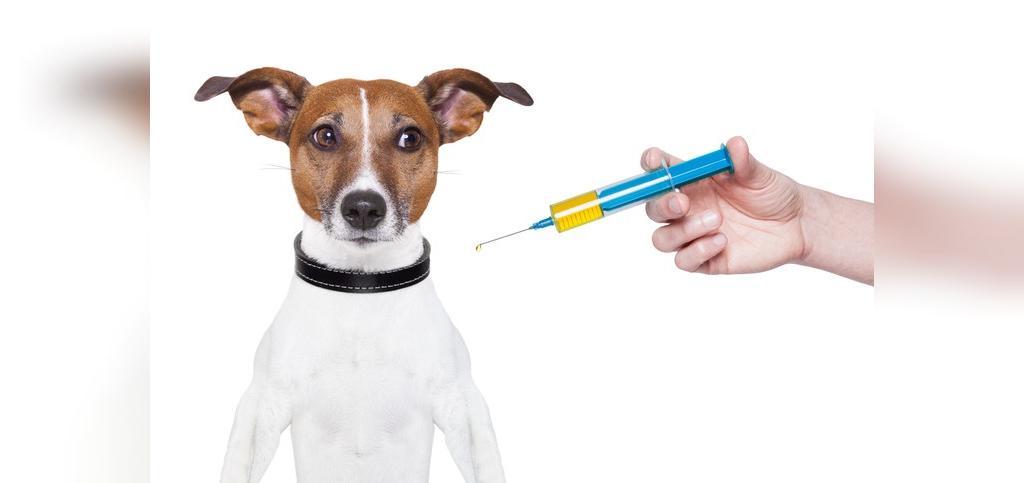 واکسن های ضروری برای سگ ها