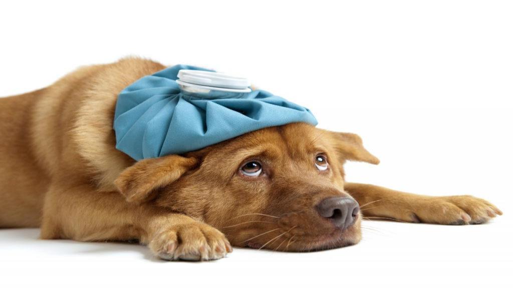 علت های اسهال سگ و راه های درمان آن