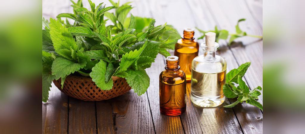 درمان خانگی بیماری گال با روغن درخت چای