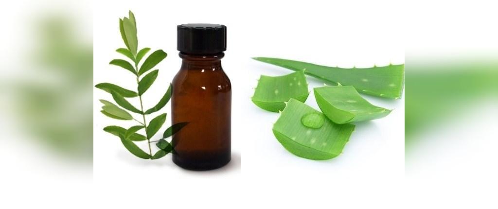آلوئه ورا و روغن درخت چای برای درمان جوش