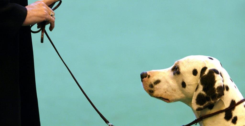 اصول تربیت سگ خانگی